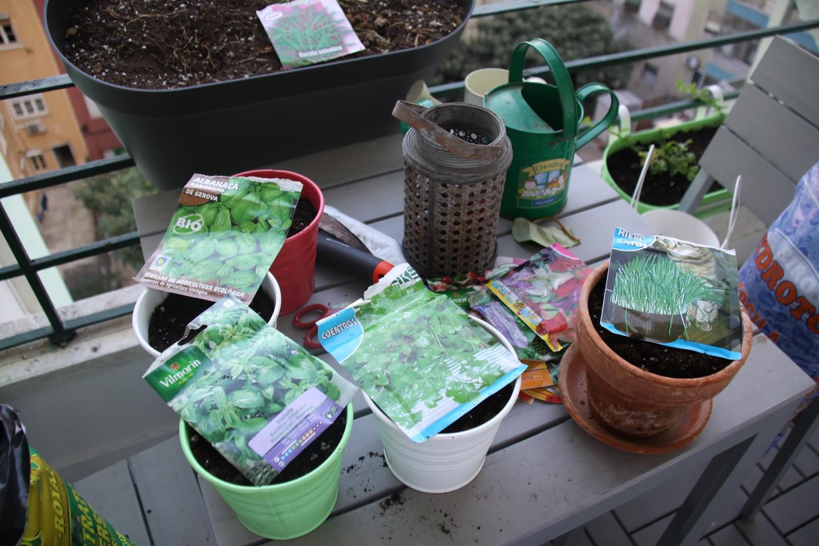 3. Coloque substrato próprio para plantas aromáticas.
