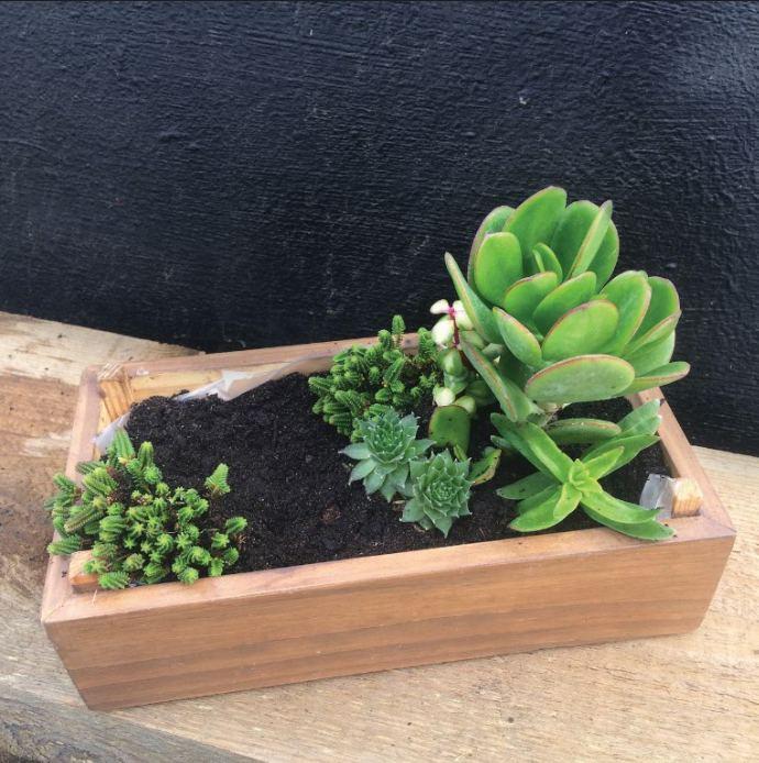 4. Plantar as suculentas: a mais alta deve ser plantada num dos lados da caixa com as mais pequenas à volta, como se fosse uma árvore com pequenos arbustos.