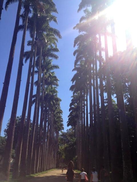 A impressionante alameda das palmeiras imperiais.