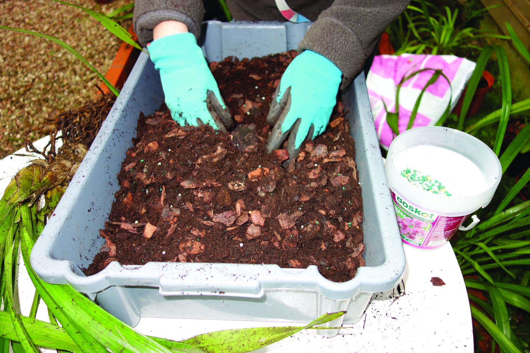 1. Prepara-se o substrato de orquídea; mistura-se adubo granulado de longa libertação.