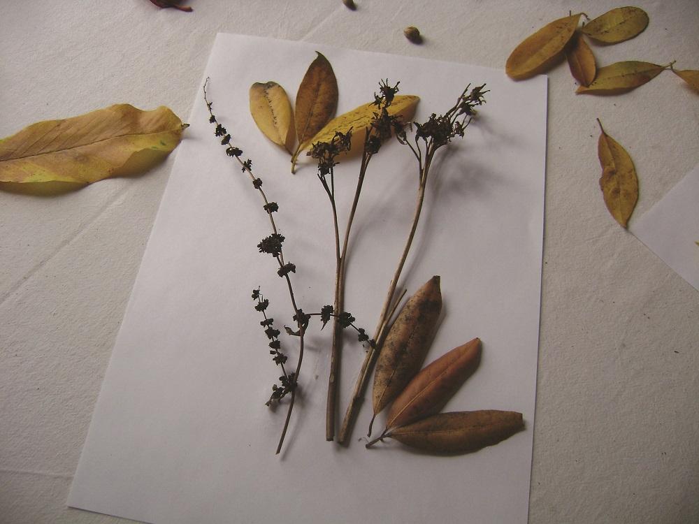 Colagem com folhas e caules seco
