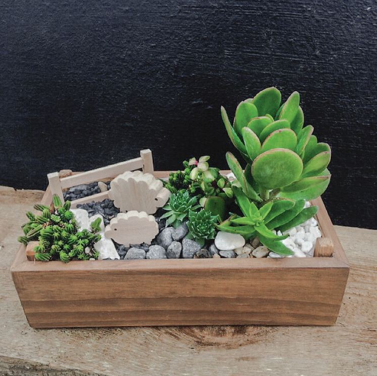 Mini jardim de suculentas. Veja de seguida o que precisa e como fazer.