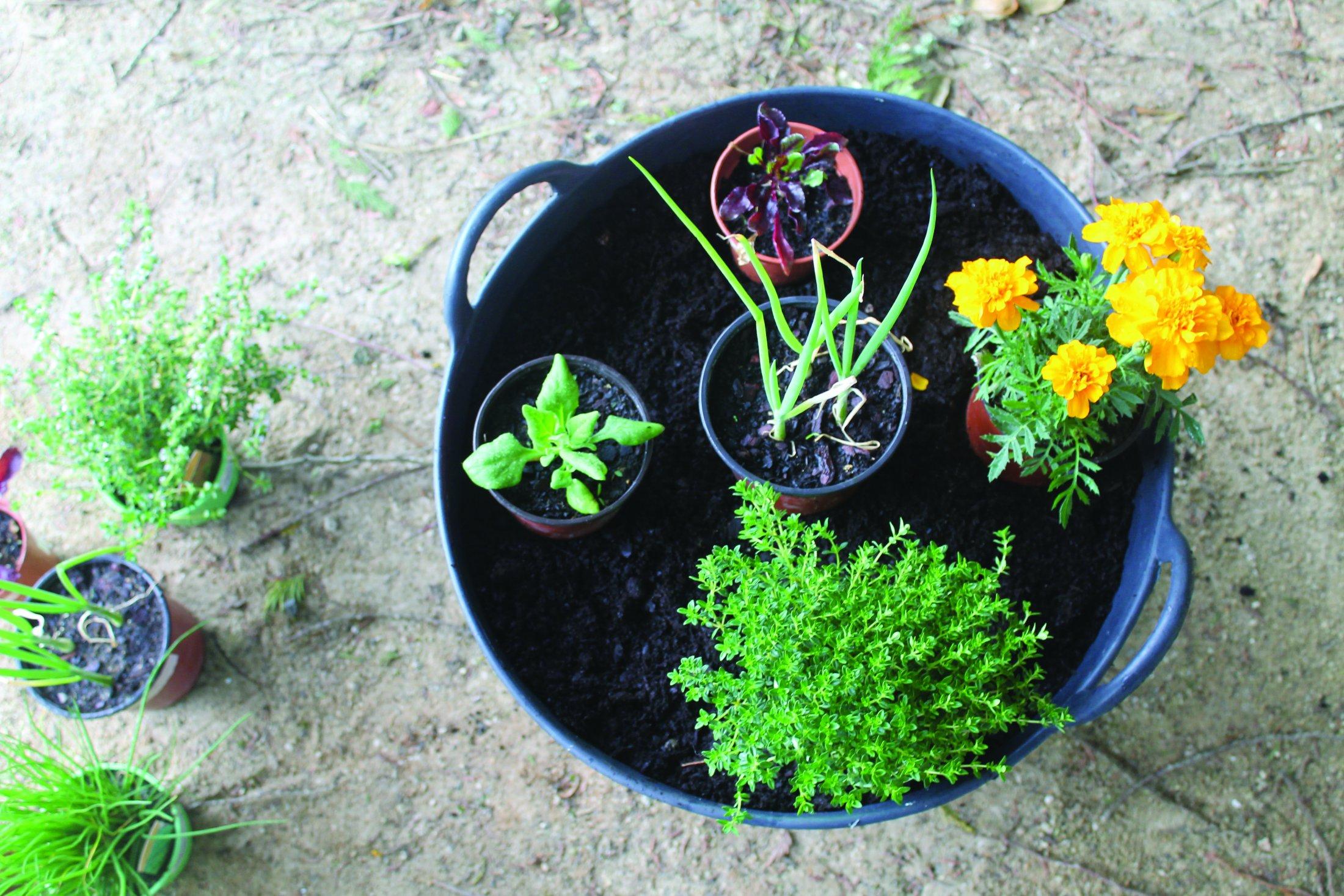 6. Distribuir as plantas pela floreira.