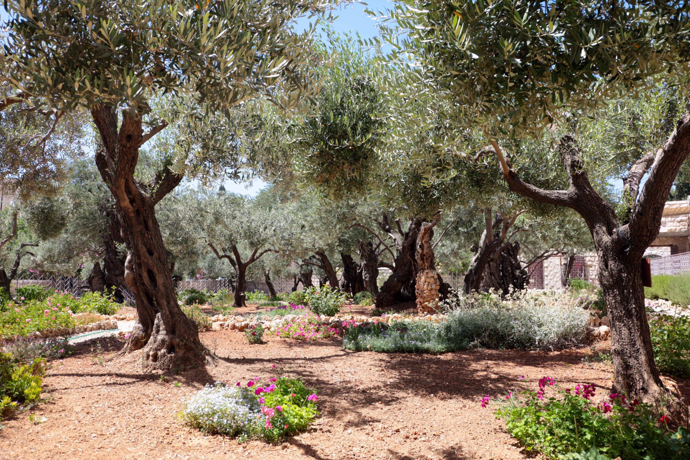 Jardim com oliveiras. Foto: Thinkstock