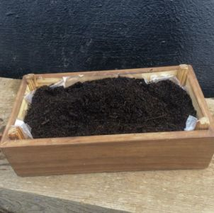 3. Colocar o substrato por cima da leca, preenchendo a caixa quase na totalidade.