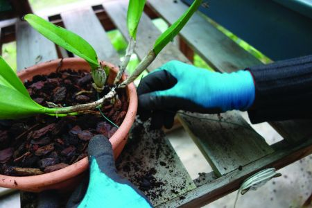Para os vasos ficarem mais bonitos depois de posto o substrato agarra-se a planta com arames.
