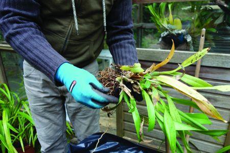As Brassada tinham folhas secas e o substrato era inexistente.