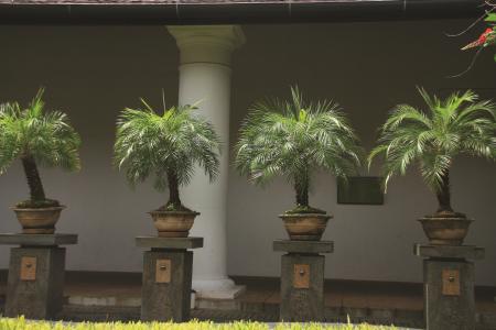 Em vasos num terraço tropical