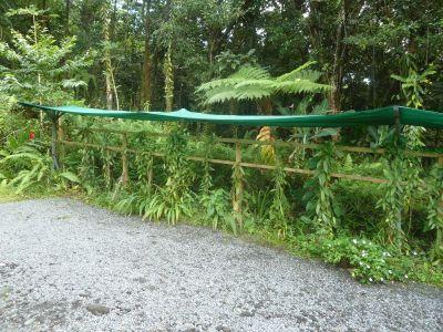 As plantas da baunilha, nos suportes, mas também nas árvores da floresta