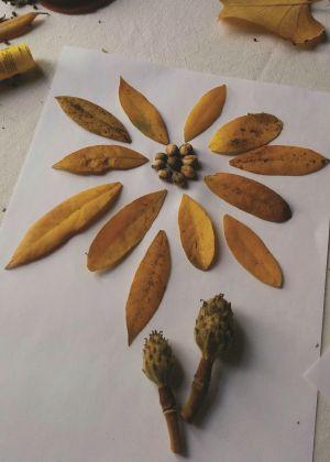 Colagem com várias folhas