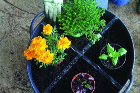 Aprenda a fazer uma mini horta com os miúdos. Clique na seta para ver todos os passos.