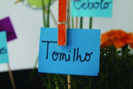 3. Escolher e etiquetar as plantas.