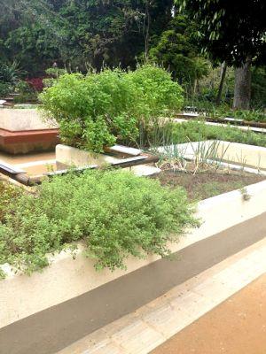 O jardim sensorial.