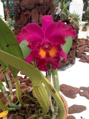 O Orquidário é um espetáculo à parte, com os seus 3000 exemplares de orquídeas.