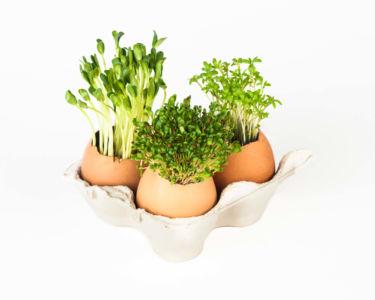 Ervas aromáticas plantadas em cascas de ovo.