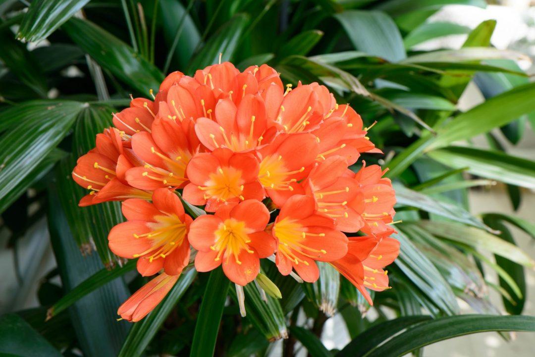 Guia plantas que gostam de sombra um jardim para cuidar - Flores de sombra ...