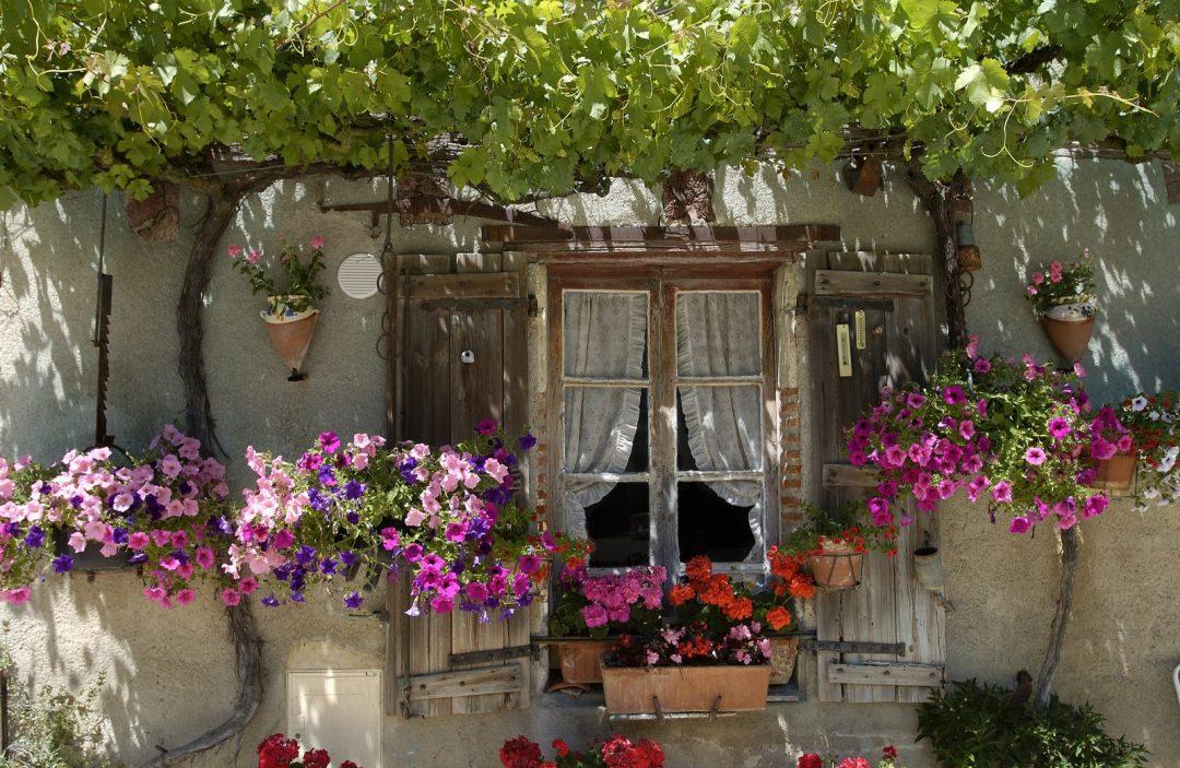 Jardim na janela