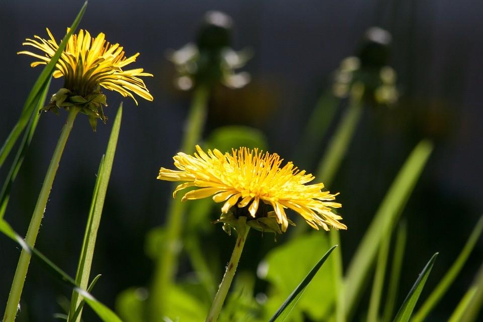 plantas detox