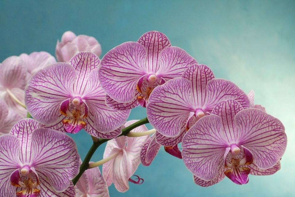 Exposição/Venda Internacional de Orquídeas