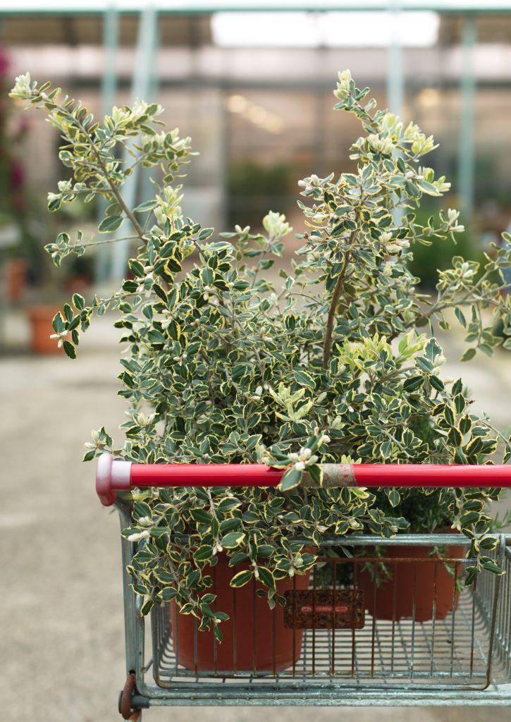 poupar na compra de plantas