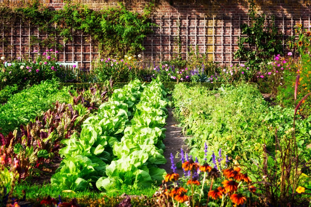 consociação de culturas horta