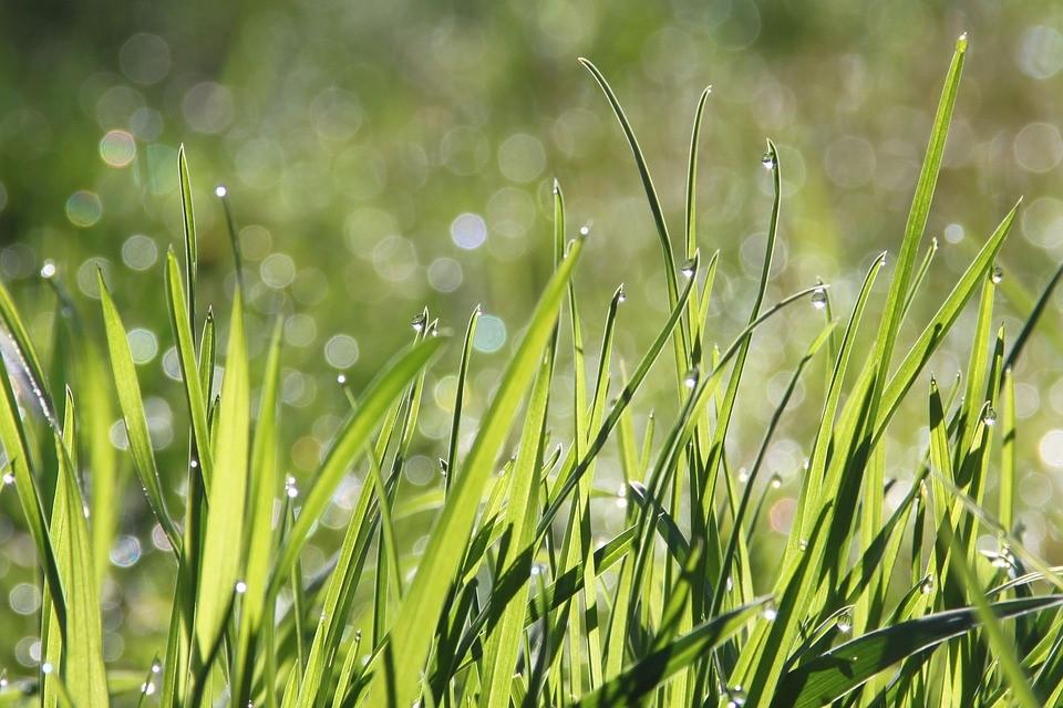 biocombustível a partir de ervas
