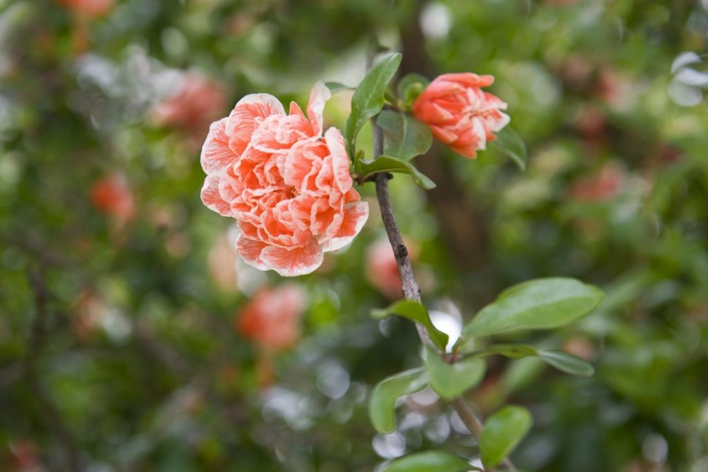 maio em flor