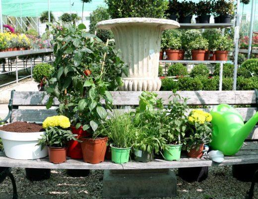 comprar plantas