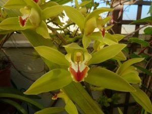 Orquídeas nos jardins