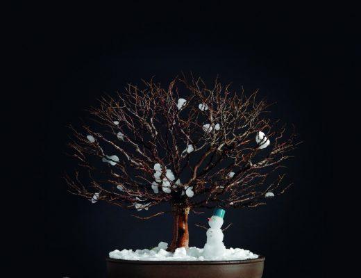 bonsai no inverno