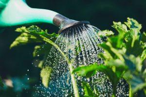e63eeb342 Colocar gravilha no solo, escolher espécies tolerantes à seca ou fazer boas  coberturas são soluções que funcionam quando o objetivo é poupar água.